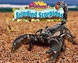 Stinging Scorpions, Natalie Lunis, 1597167568