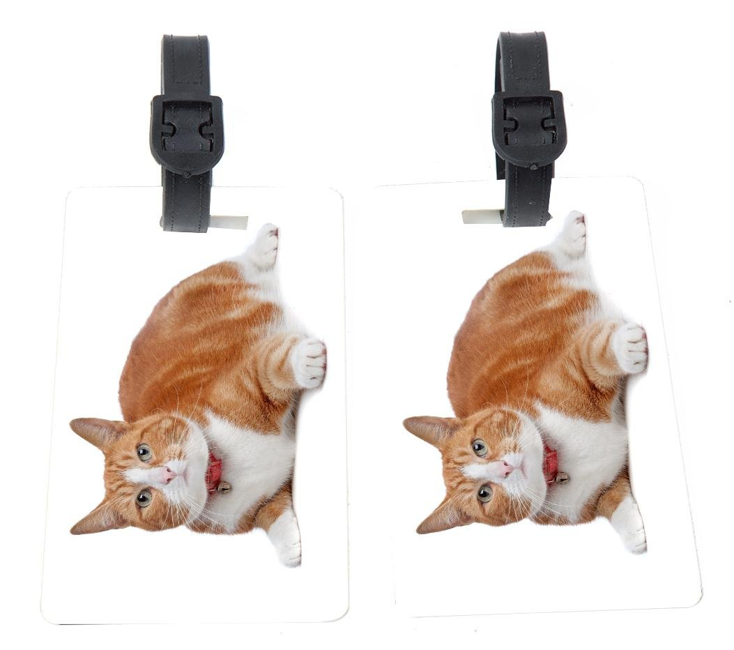 European Short Haired Ginger And White Cat Design Plastic Flexi Luggage Identifier Tags + Strap Closure