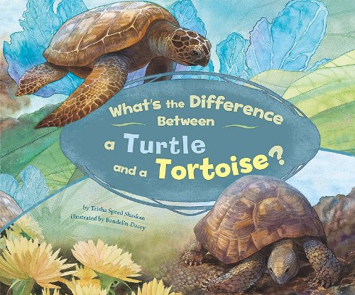 What's the Difference Between a Turtle and a Tortoise? (Difference Between Turtle And Tortoise In English)