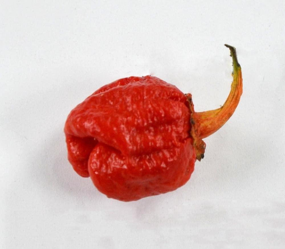 7 Pot Bubble Gum Pepper Seeds - 5+ Rare Seeds + FREE Bonus 6 Variety Seed Pack - a $29.95 Value! Packed in FROZEN SEED CAPSULES for Growing Seeds Now or Saving Seeds For Years