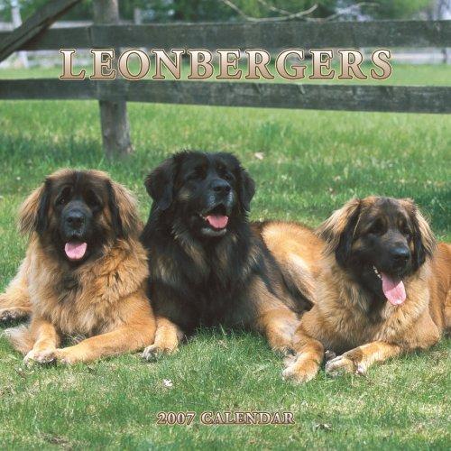 Leonbergers 2007 Calendar