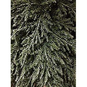 """Artificial UV Rated Outdoor 30"""" Ball Cypress Topiary Tree Bundled with Rock Planter Cover, by Silk Tree Warehouse 2"""