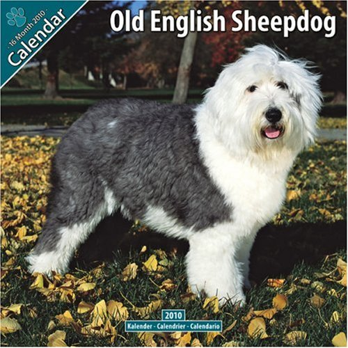 Old English Sheepdog 2010 Wall Calendar #10057-10 (Calendar 2010 Sheepdog)