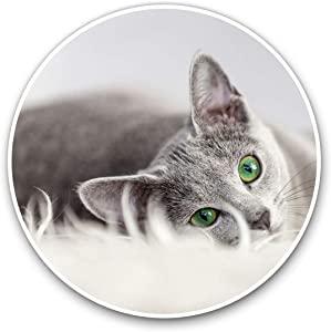 Awesome Vinyl Stickers (Set of 2) 10cm - Russian Blue Cat Kitten Pet Fun Decals for Laptops,Tablets,Luggage,Scrap Booking,Fridges,Cool Gift #2605