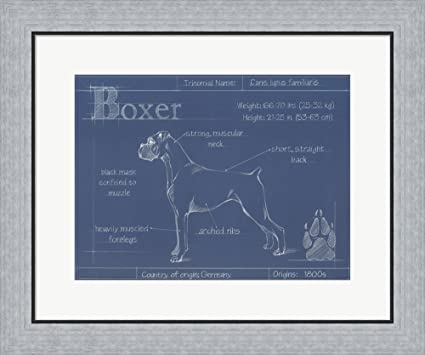 Amazon blueprint boxer by ethan harper framed art print wall blueprint boxer by ethan harper framed art print wall picture flat silver frame 24 malvernweather Image collections