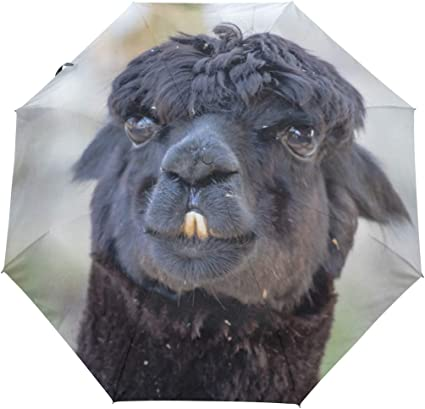 Funny Llama Alpaca Automatic Open Folding Compact Travel Umbrellas For Women