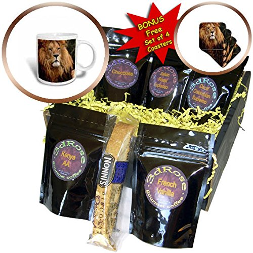 3dRose Sven Herkenrath Animal - Majestic Lion With A Furry Head Wildlife Photography - Coffee Gift Baskets - Coffee Gift Basket (cgb_286407_1)