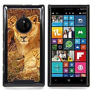 Queen Pattern - FOR Nokia Lumia 830 - Cubs Lion African Savannah Nature Animal - Cubierta del caso de impacto con el patr???¡¯???€????€?????