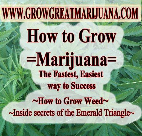 How to Grow Marijuana Indoor and Outdoor - The Fastest Easiest way to Grow the Best Marijuana | How to Grow Legal Marijuana | How to grow Medical Marijuana (Best Way To Grow Indoors)