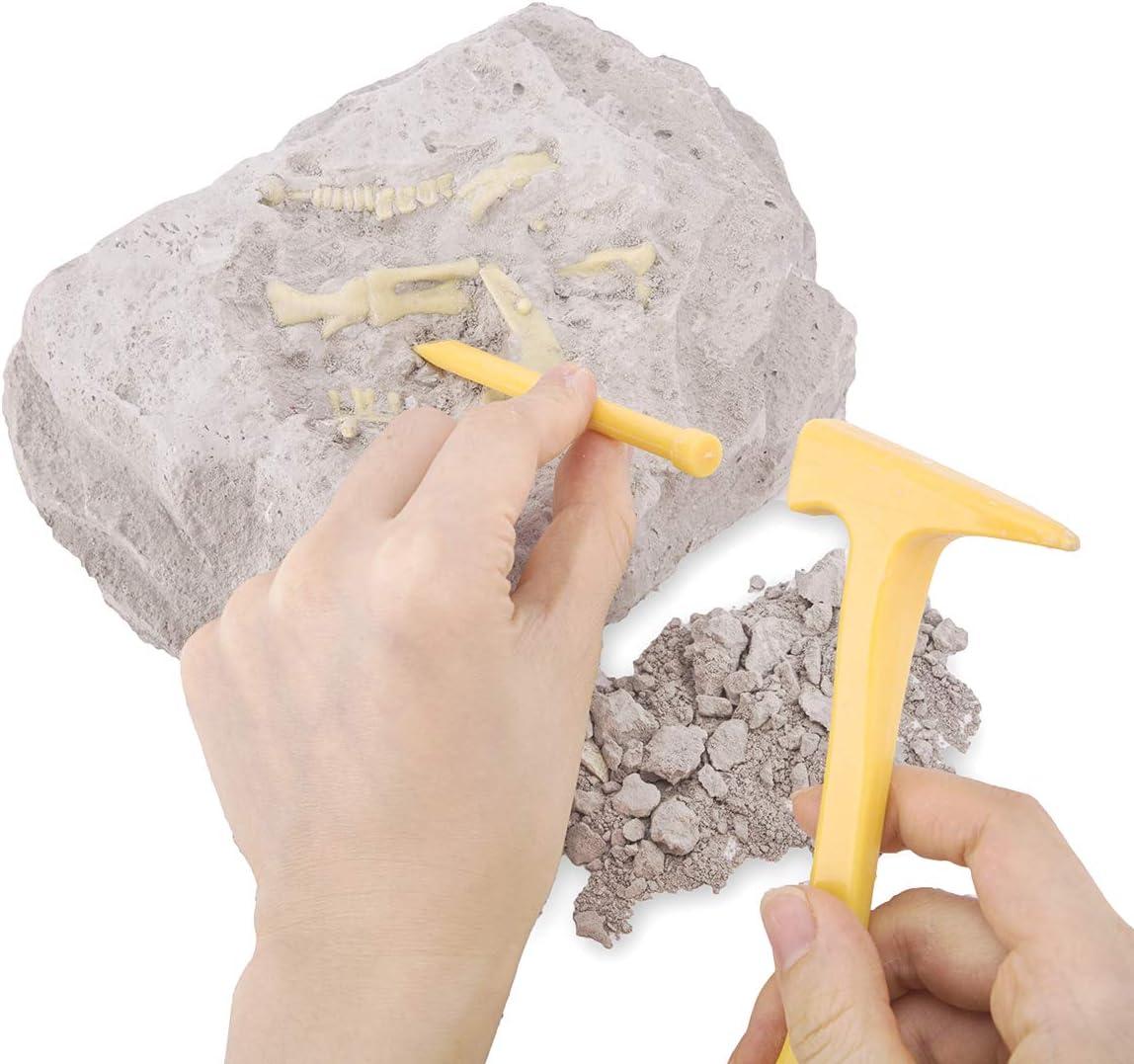 Beyondtrade Dinosaur Dig Kit for Kids Dino Fossil Dig Kits Dinosaur Skeleton for Children/'s Excavation Science Education DIY STEM Toys