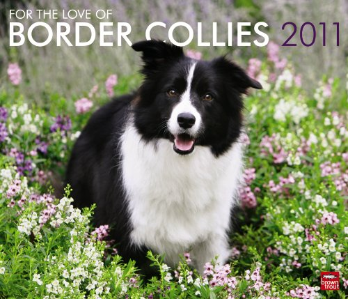 Collie Calendar 2010 Wall - Border Collies, For the Love of 2011 Deluxe Wall (Multilingual Edition)