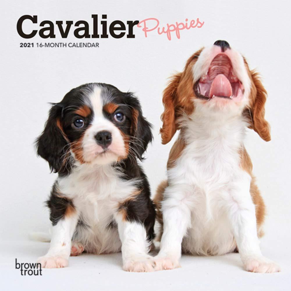 Cavalier King Charles Spaniel 2021 SLIM Dog Breed Calendar 15/% OFF MULTI ORDERS!