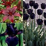 Van Zyverden Color Your Garden Black Collection Set of 23 Bulbs