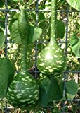 TROPICA - zucca - gigante (Cucurbita lagenaria) - 15 semi