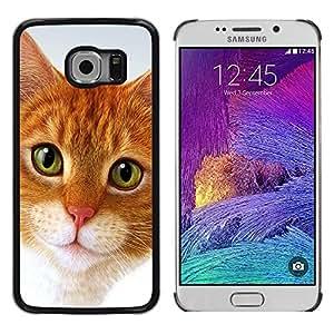 Be Good Phone Accessory // Dura Cáscara cubierta Protectora Caso Carcasa Funda de Protección para Samsung Galaxy S6 EDGE SM-G925 // Cymric Cat American Shorthair