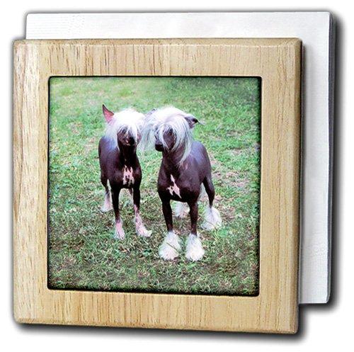 犬Chinese Crested Hairless – Chinese Crested Hairless – タイルナプキンホルダー 6 inch tile napkin holder nh_415_1 6 inch tile napkin holder  B000MBPVII
