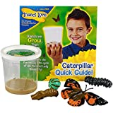 Insect Lore 5 Live Caterpillars – Cup of Caterpillars Butterfly Kit Refill – Plus Butterfly Life Cycle Stages Toy Figurines – Shipped Now