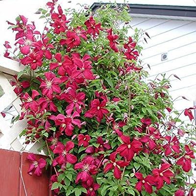 Plante Exterieur Fleur