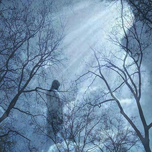 Into The Light by Tina Mancusi