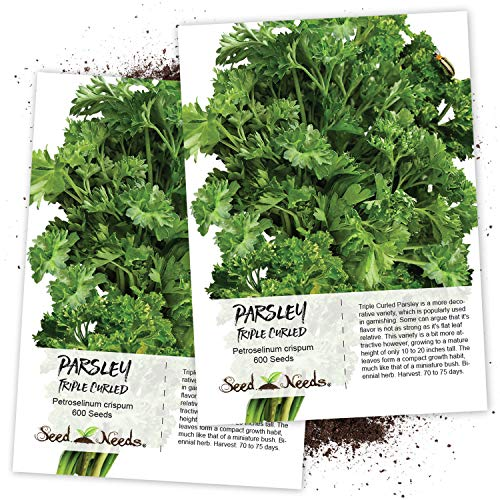 Seed Needs, Triple Curled Parsley (Petroselinum crispum) Twin Pack of 600 Seeds Each Non-GMO ()