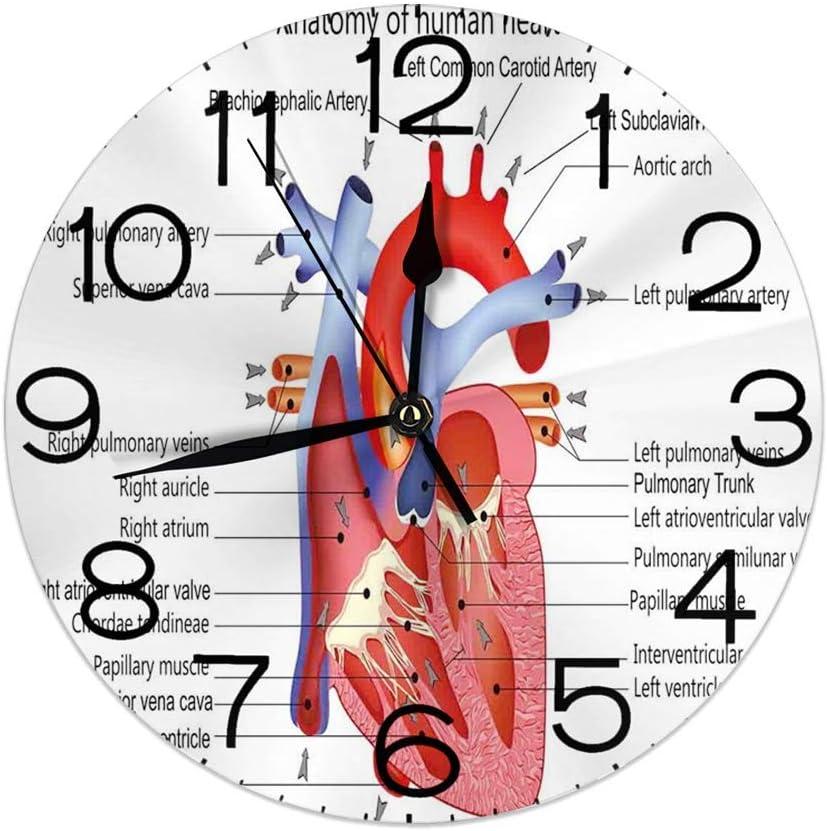GoodLucke Reloj de Pared Decorativo, Educativo, médico Estructura de los Corazones Cuerpo Humano Anatomía Órgano Venas Cardiología