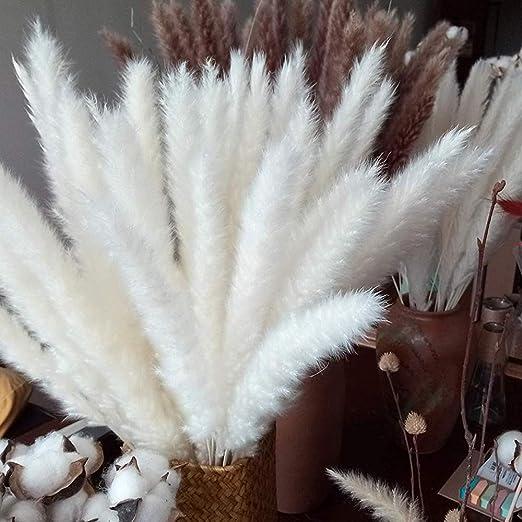 CHBOP 30 x Getrocknetes Pampasgras nat/ürlicher Blumenstrau/ß Deko f/ür Inneneinrichtungen Fotografie Hochzeit wei/ß