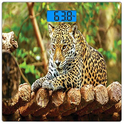 - Precision Digital Body Weight Scale Zoo Ultra Slim Tempered Glass Bathroom Scale Accurate Weight Measurements,Jaguar on Wood Floor Wildlife Animals Feline Big Cat Mammal Predator Resting,Green Yellow