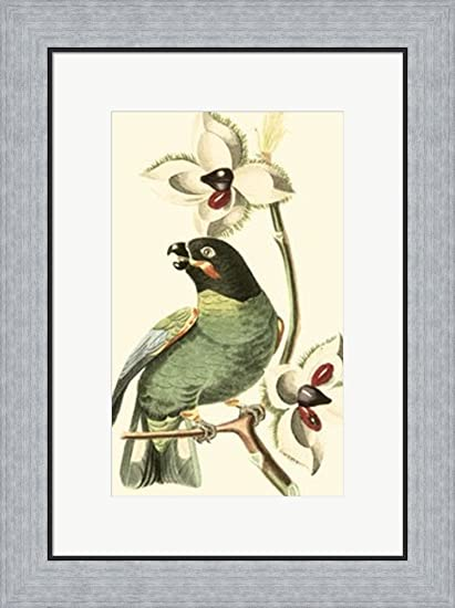 Amazon.com: Cuvier Exotic Birds III by Baron cuvier Georges Framed ...