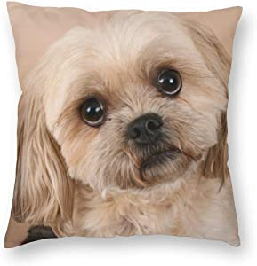 GZLFDTH-LJ Portrait of A Cute Shitzu Dog Throw Pillow Covers Decorative Protector Cases Home Decoration Zippered Pillowcase Square Cushion Cover for Sofa, Couch, Bed, Car