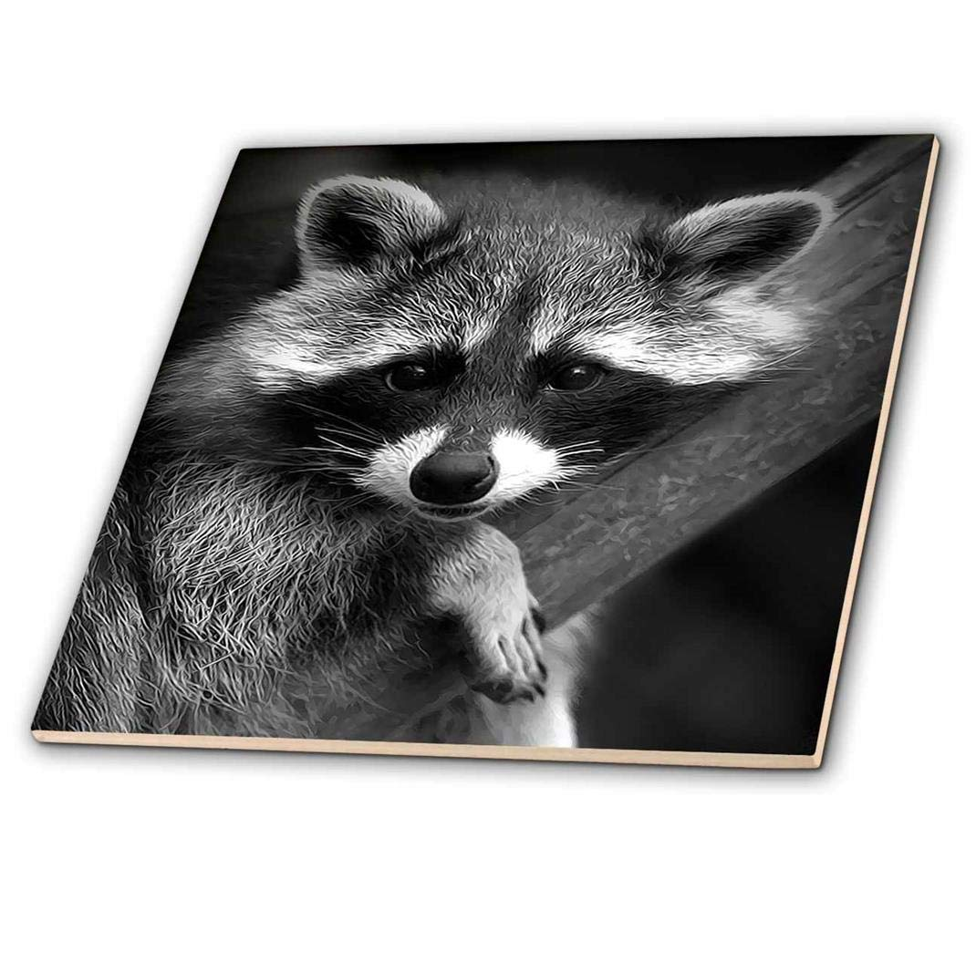 6-Inch 3dRose ct/_173001/_2 Baby Raccoon Black and White Digital Image-Ceramic Tile