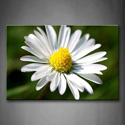 Amazon daisy with yellow heart and white petals wall art daisy with yellow heart and white petals wall art painting the picture print on canvas flower mightylinksfo
