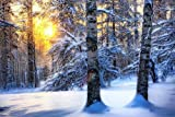 Winter Forest Sunrise - Art Print Poster,Wall Decor,Home Decor(36x24inches)