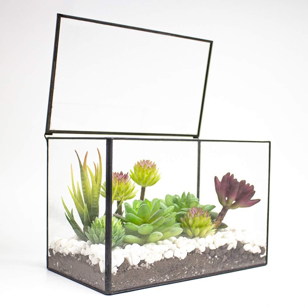Ferrisland Rectangle Geometric Desk Clear Glass Terrarium Box w Lid Tabletop Succulent Air Plant Moss Fern Planter Black Flower Pot-8.3 x5.5 x4.7