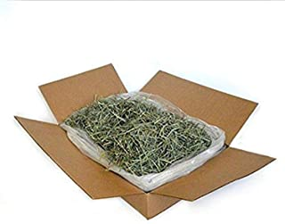 product image for American Pet Timothy Gold 5Lb