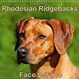 Rhodesian Ridgebacks Face to Face 2018: Beautiful Portraits of the Well Known Dog Breed Originated in South Africa, the Rhodesian Ridgeback. (Calvendo Animals)