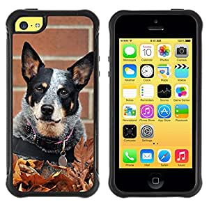 LASTONE PHONE CASE / Suave Silicona Caso Carcasa de Caucho Funda para Apple Iphone 5C / Rat Terrier Toy Fox Small Dog Autumn Fall
