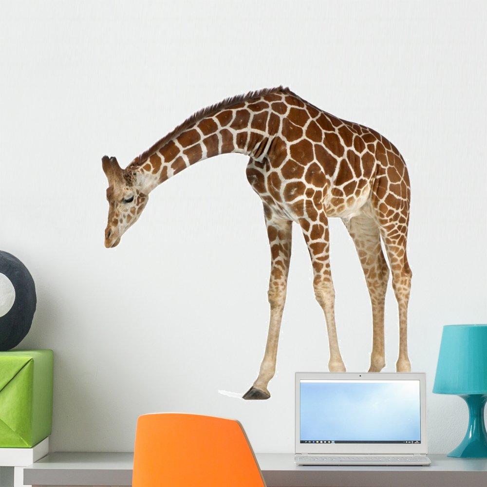 Wallmonkeys Reticulated Somali Giraffe Wall Decal Peel and Stick Animal Graphics (24 in W x 24 in H) WM104740