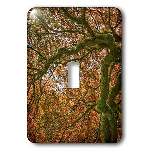 3dRose Danita Delimont - Autumn - USA, Washington State, Bainbridge Island. Japanese maple tree close-up - 2 plug outlet cover (lsp_315126_6) (Wall Washington Covers)