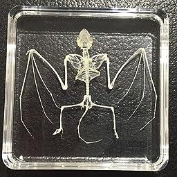 Bat Skeleton Acrylic