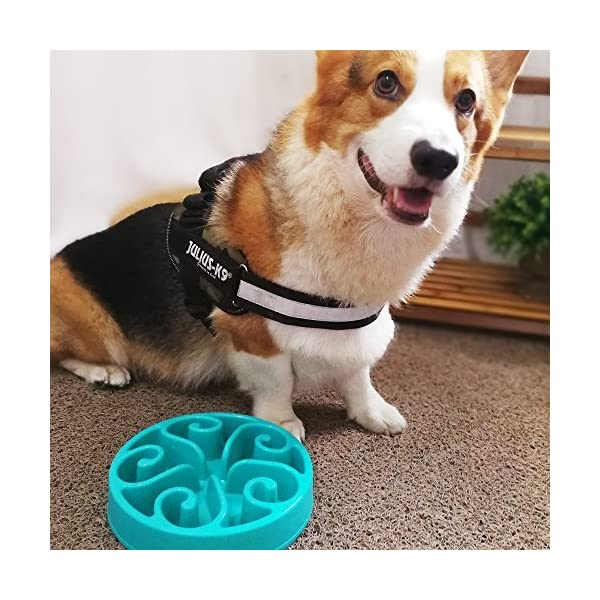 InnoPet Slow Feed Dog Bowl, Anti Choking, Non-Slip Block at The Bottom, Prevent Bloating, Pet Interactive Fun Feeder… Click on image for further info. 5