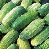 Cucumber - Gherkin - 50 Seeds