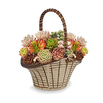 Dahlia Textured Basket Ceramic Succulent Planter/Plant Pot/Flower Pot/Bonsai Pot, 2: Garden & Outdoor