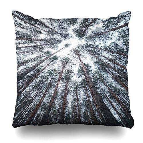 Ahawoso Throw Pillow Cover Square 18x18 Looking Blue Abstract View Tops Pine Trees Winter Forest Nature Brown Canopy Autumn Black Design Color Pillowcase Home Decor Cushion Case