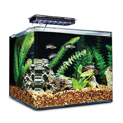Imagitarium Frameless Freshwater Aquarium Kit, 6.8 GAL by Imagitarium