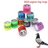 WWahuayuan 40 Pcs Aluminium Bird Foot Ring Diameter 8mm Pigeon Leg Rings for 2020 Reusable Racing Pigeon Foot Ring Pigeon Training Supplies - Blue