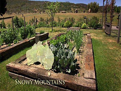 Snowy Mountains of NSW Apple Italian Wine