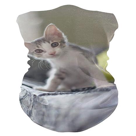 Arco de dibujos animados Gato Animal Elásticos Cintas cabeza ...