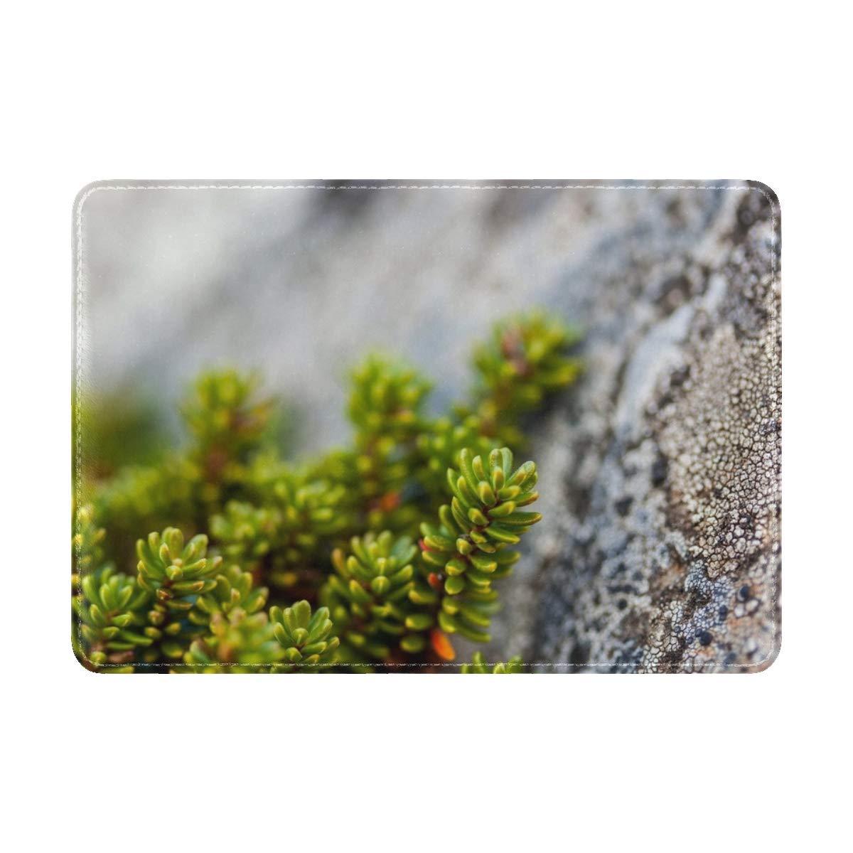 Plants Rocks Macro Leather Passport Holder Cover Case Travel One Pocket