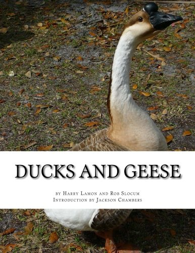 ducks-and-geese
