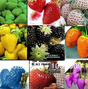 2100pcs 30kinds Superbig Klettern Erdbeeresamen Gemuse Obst Samen